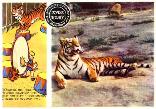 Детская открытка тигр 89